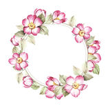 O quadro com as flores de selvagem aumentou Ilustração da aguarela Imagens de Stock