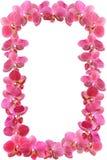 O quadro da foto da orquídea floresce com gotas de orvalho Imagem de Stock Royalty Free