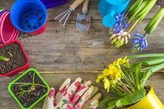 O quadro da mola floresce, ferramentas de jardinagem, luvas Foto de Stock