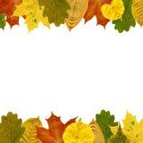 O quadro das folhas de outono Isolado no branco Fotos de Stock