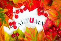 O quadro de Autumn Letters e da beira de Autumn Leaves colorido e seja Fotos de Stock