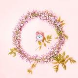 O quadro do círculo do despertador cor-de-rosa e as flores bonitas da glicínia ramificam com os botões das flores no fundo cor-de foto de stock royalty free