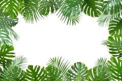 O quadro fez das folhas tropicais verdes frescas no fundo branco fotos de stock royalty free