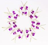 O quadro floral do círculo do teste padrão feito da floresta pequena floresce a violeta no fundo branco Imagens de Stock