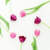 O quadro redondo com tulipa cor-de-rosa floresce no fundo branco Configuração lisa Vista superior Imagem de Stock