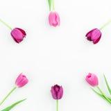 O quadro redondo com tulipa cor-de-rosa floresce no fundo branco Configuração lisa Vista superior Fundo do dia de Valentim Fotografia de Stock