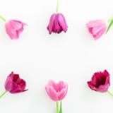 O quadro redondo com tulipa cor-de-rosa floresce no fundo branco Configuração lisa Vista superior Fundo do dia de Valentim Foto de Stock
