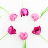 O quadro redondo com tulipa cor-de-rosa floresce no fundo branco Configuração lisa Vista superior Fundo do dia de Valentim Imagens de Stock Royalty Free