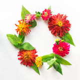 O quadro redondo feito dos zinnias das folhas, das flores e dos botões difere dentro Foto de Stock