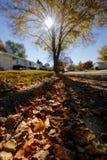 O que árvore amarela! Imagens de Stock Royalty Free