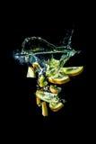 O quivi corta a queda no close-up da água, macro, respingo, bolhas, isoladas no preto Fotografia de Stock