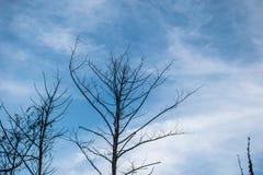 O rádio da árvore sae no ponto da selva atrasado no céu d Foto de Stock