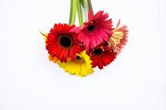 O ramalhete bonito da mola floresce em um fundo branco Imagens de Stock Royalty Free