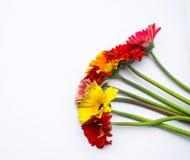 O ramalhete bonito da mola floresce em um fundo branco Imagem de Stock Royalty Free