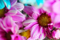 O ramalhete colorido das flores do verão ajustou-se por um momento especial da vida fotografia de stock royalty free