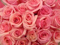 O ramalhete da cor-de-rosa levantou-se Fotografia de Stock