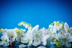 O ramalhete da mola do lírio do vale e a maçã florescem Imagens de Stock Royalty Free
