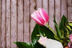 O ramalhete da tulipa com um verde sae em um fundo das placas Fotos de Stock