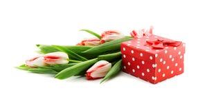 O ramalhete das tulipas isoladas no fundo branco com um vermelho doted Imagem de Stock