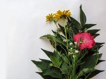 O ramalhete de plantas selvagens floresce no fundo branco Imagens de Stock
