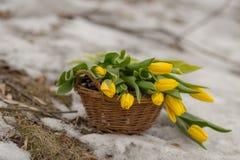 O ramalhete de tulipas amarelas em uma cesta marrom em uma luz borrou o fundo Foto de Stock