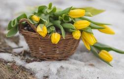 O ramalhete de tulipas amarelas em uma cesta marrom em uma luz borrou o fundo Imagens de Stock Royalty Free