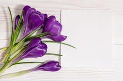 O ramalhete do açafrão floresce com o cartão vazio para seu texto Fotos de Stock
