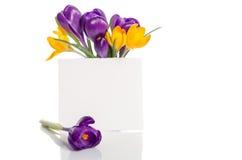 O ramalhete do açafrão floresce no vaso com cartão vazio Fotos de Stock Royalty Free