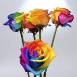 O ramalhete do arco-íris aumentou Foto de Stock Royalty Free