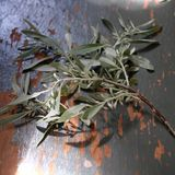 O ramalhete do bichano-salgueiro ramifica em um fundo de madeira Imagem de Stock Royalty Free