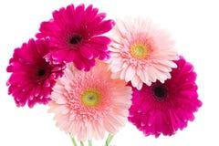 O ramalhete do gerbera cor-de-rosa brilhante Foto de Stock