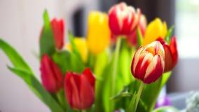O ramalhete do grupo de tulipas coloridas fecha-se acima da luz natural Fotografia de Stock Royalty Free