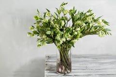 O ramalhete do hellebore da mola floresce em um vaso Vida floral da mola ainda com flores do helleborus Decoração natural home Imagem de Stock