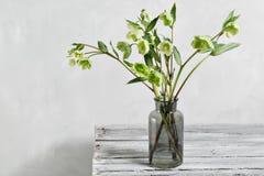O ramalhete do hellebore da mola floresce em um vaso Vida floral da mola ainda com flores do helleborus Decoração natural home Imagens de Stock Royalty Free