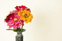 O ramalhete do zinnia cor-de-rosa floresce em um vaso isolado indoor Copie o espaço fotografia de stock