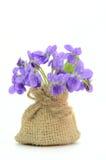 O ramalhete pequeno com prado floresce a viola Imagens de Stock