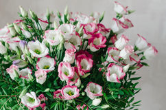 O ramalhete romântico bonito do eustoma cor-de-rosa e branco floresce o macro em um fundo branco Imagem de Stock Royalty Free