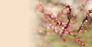 O ramo brota a natureza da árvore da mola Imagem de Stock