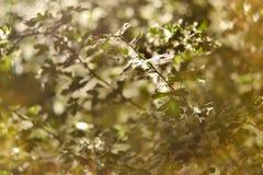 O ramo coberto com o fluff gosta da neve foto de stock