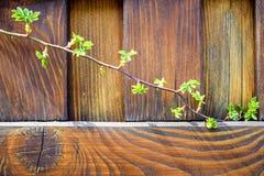 O ramo da rosa selvagem em um fundo uma cerca de madeira, estilo de vida rural imagens de stock royalty free