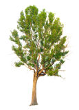 O ramo de árvore Foto de Stock Royalty Free