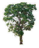 O ramo de árvore Fotos de Stock Royalty Free