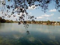 O ramo de árvore acima do lago imagem de stock royalty free