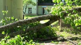 O ramo de árvore caído na cerca e a entrada para abrigar após o verão atacam vídeos de arquivo