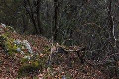 O ramo de árvore caído seco sae do lado do penhasco da montanha fotografia de stock