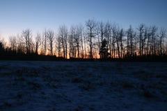O ramo de árvore da neve ajardina o por do sol Imagem de Stock Royalty Free