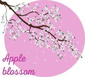 O ramo de árvore realístico da maçã com florescência floresce a ilustração Fotos de Stock Royalty Free