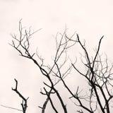 O ramo de árvore sem alguns sae Imagem de Stock Royalty Free