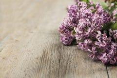 O ramo de um lilás Fotos de Stock