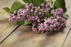 O ramo de um lilás Fotos de Stock Royalty Free